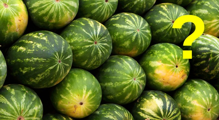 Which watermelon should you buy? Here are four golden rules to choose the best one ... Keep them in mind!