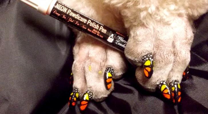 Pintar as unhas de cães e gatos: a nova moda que esconde muitos riscos