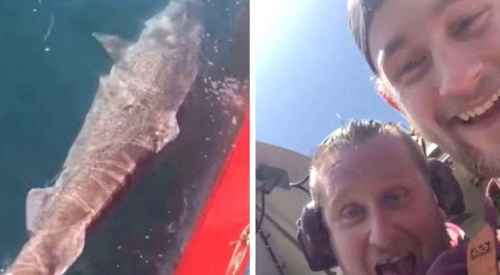 Ze snijden de staart van een haai af en gooien hem lachend in zee: nu riskeren ze een voorbeeldige straf