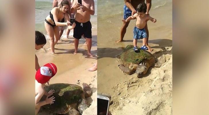 Dieses seltene Exemplar einer Schildkröte wurde an den Strand geschleppt, und mit Badenden fotografiert