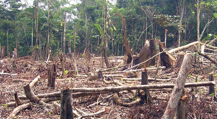 Brésil, déforestation hors de contrôle : 739 km2 de forêt amazonienne détruits rien qu'en mai 2019