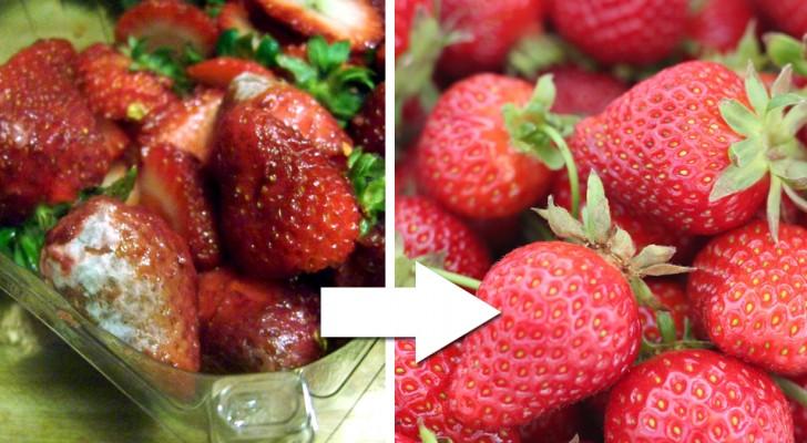 I coltivatori rivelano il loro trucco per mantenere le fragole fresche per settimane in modo naturale
