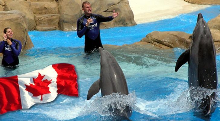 Le Canada adopte une loi historique interdisant la captivité des dauphins, des orques et des cétacés de toutes espèces