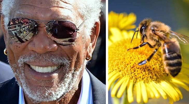 Morgan Freeman hat seine riesige Ranch in einen Zufluchtsort für Bienen verwandelt