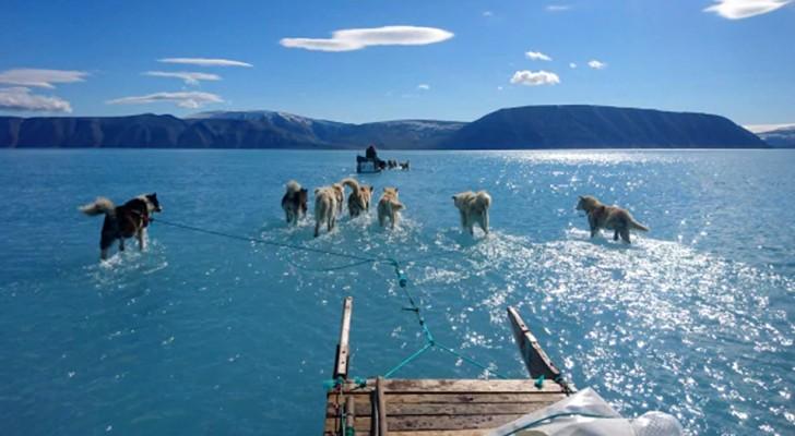 Grönland verlor an einem Tag 2 Milliarden Tonnen Eis: Schlittenhunde gehen auf dem Wasser