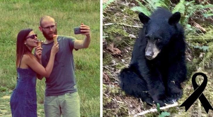 Een beer die van toeristen te eten kreeg om selfies te nemen, werd neergeschoten door de autoriteiten omdat hij te veel gewend was aan mensen