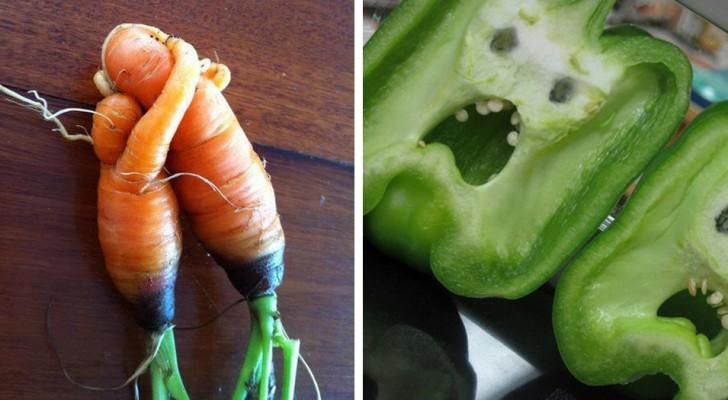 20 incredibili ortaggi che sembrano essersi messi in posa e aver preso vita