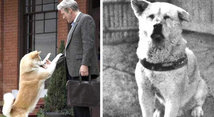 Het waargebeurde verhaal van Hachiko, de hond die de wereld met zijn liefde en toewijding ontroerde