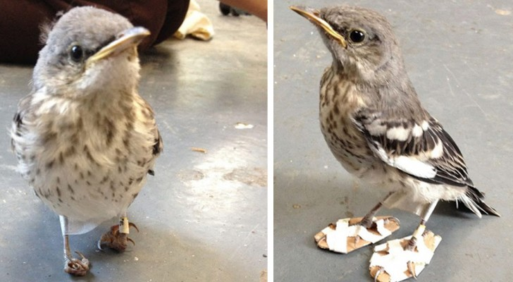 Een vogel met een beperking ontvangt