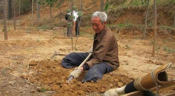 Questo 70enne disabile pianta alberi ogni mattina per 20 anni: oggi ha intorno a sé una rigogliosa foresta