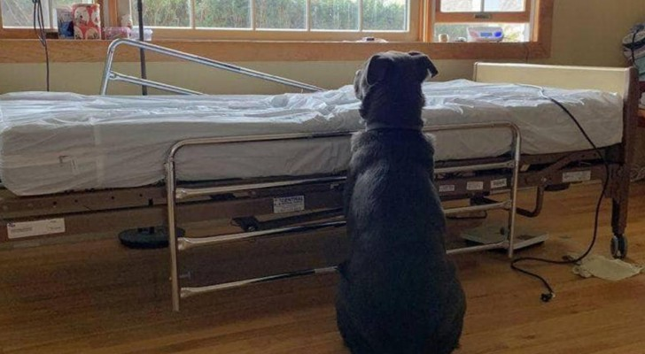 Sein Herrchen stirbt, aber der Hund weiß es nicht und wartet tagelang in der Nähe des Krankenhausbettes auf ihn