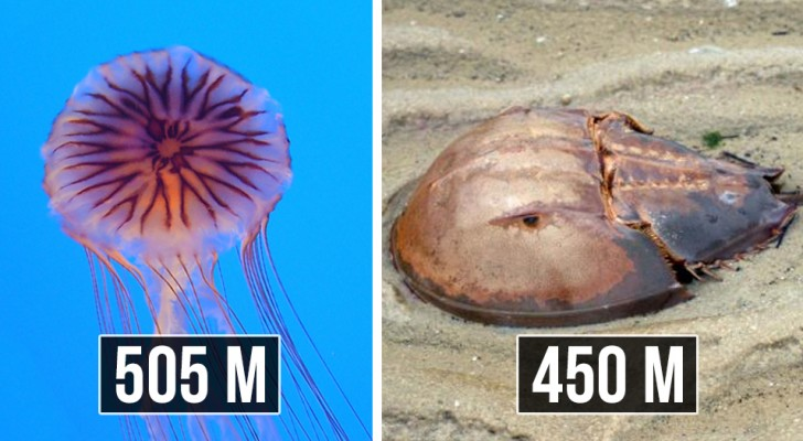 Old but gold : voici quelques-unes des plus vieilles créatures qui vivent aujourd'hui sur Terre