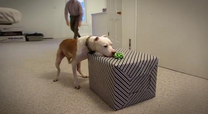 Wallace ist krank und sein letzter Geburtstag soll unvergesslich für alle sein!