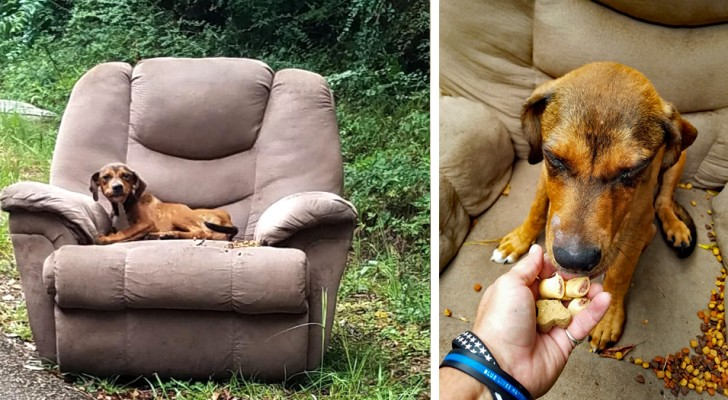 An owner abandons a dog in its favorite chair by the roadside and receives an exemplary reproach!