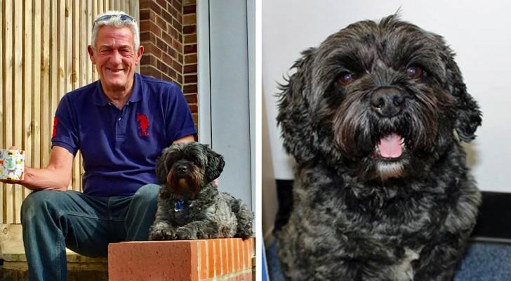 Het verhaal van Ted, de hond die zijn baasje deed ontwaken uit een coma