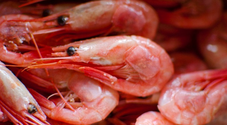 Pay attention to the shrimps you eat! Here is why shrimps can be a health hazard