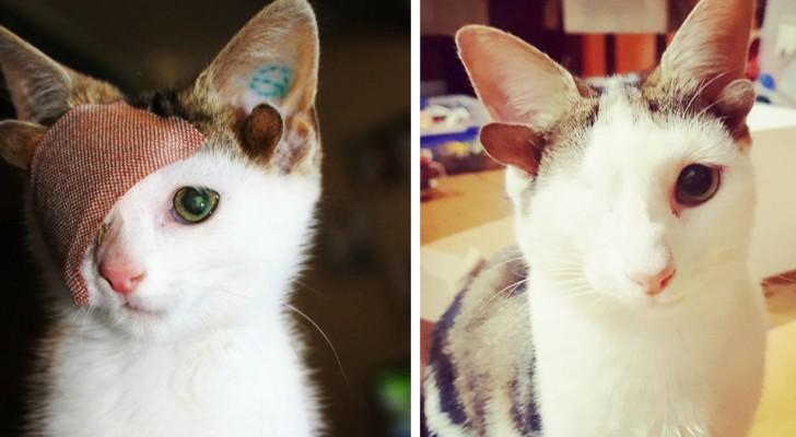 Äntligen har den här lilla katten med 4 öron och bara ett öga hittat en familj som ger honom massvis med kärlek