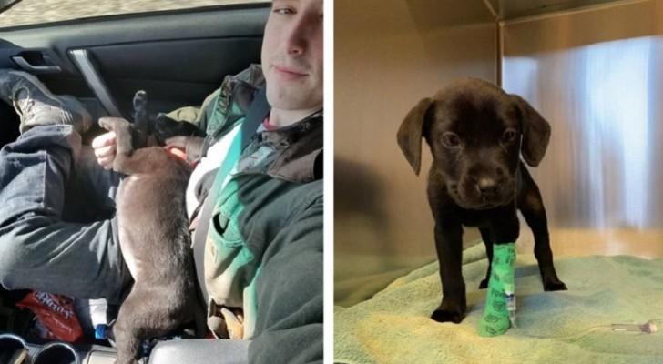 En tjej adopterar en döv hund och lär den teckenspråk för att kunna kommunicera