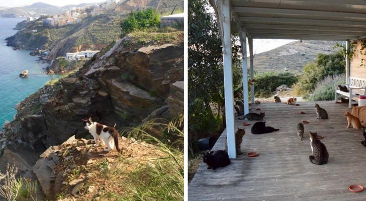 Detta hem för övergivna katter på en underbar grekisk ö söker efter en ny vaktmästare som kan ta hand om dessa 55 gulliga små gäster