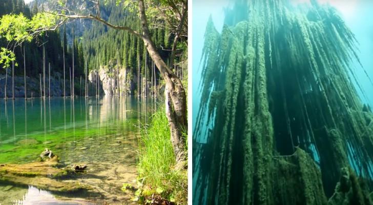 Eco a voi la surreale foresta sommersa cui gli alberi crescono al contrario