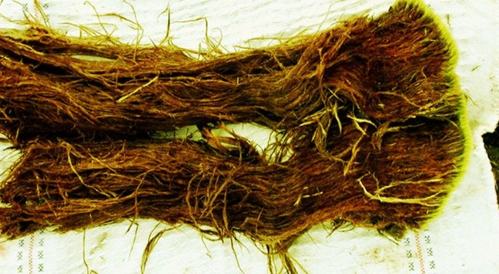 Wissenschaftler schmelzen einen tausendjährigen Eisblock und wecken Würmer aus einem 41.000 Jahre alten Schlaf