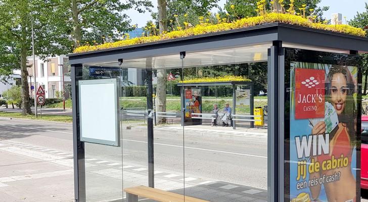 Olanda: i tetti delle fermate vengono ricoperti di piante per attirare le api e ripulire l'aria