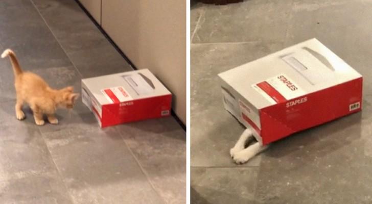 Un'azienda adotta 2 gattini per alleggerire lo stress dei dipendenti, e a giudicare dalle immagini raggiunge lo scopo