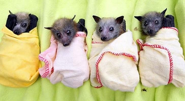 Tutto quello che dovreste e NON dovreste fare se trovate un pipistrello in difficoltà