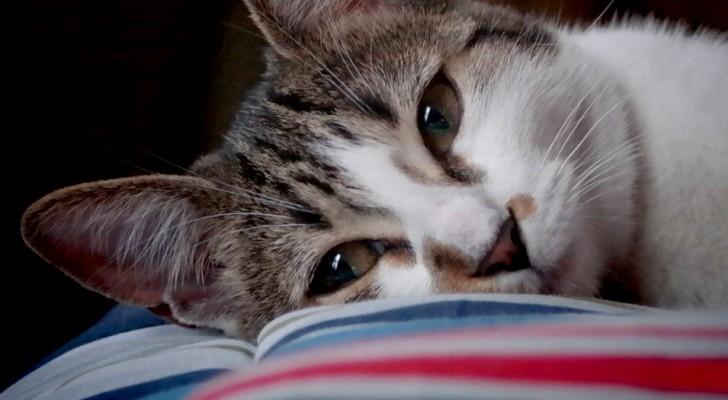 13 signes cachés pour savoir si votre chat vous dit