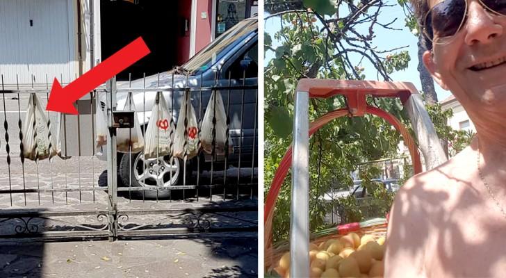 Quest'uomo appende ogni giorno al cancello le sue albicocche affinché chiunque possa mangiarle GRATIS