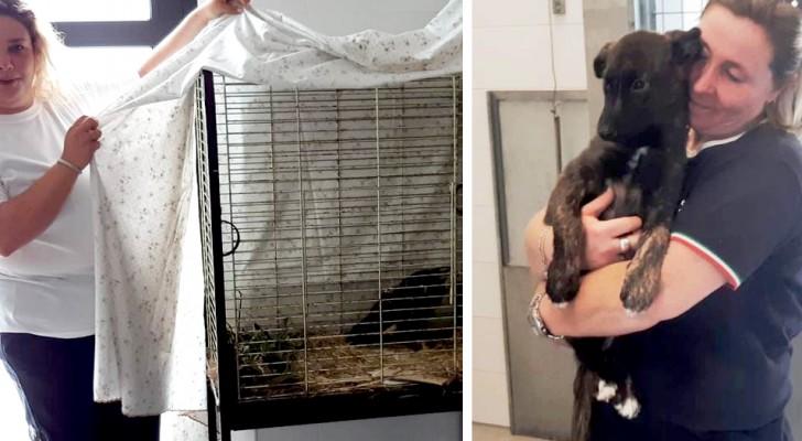 A Firenze un ex-macello si trasforma in rifugio in cui gli animali vengono curati e protetti