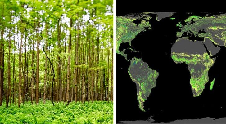 Planter un milliard d'hectares d'arbres pourrait désamorcer le réchauffement climatique