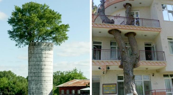 Deze gebouwen over de hele wereld laten ons zien hoe mens en natuur een perfect stel kunnen zijn