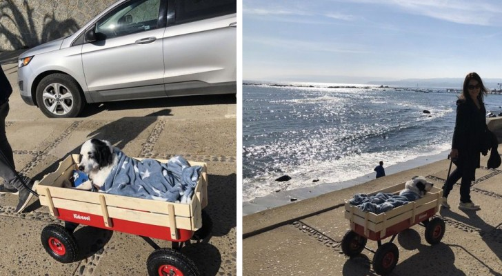 O cachorro deles tem dificuldade de caminhar sozinho, então compram um carrinho para levá-lo até a praia