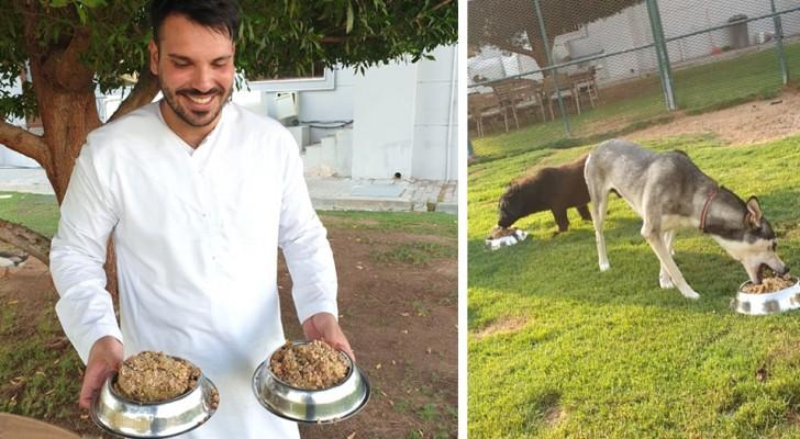 Donare il cibo avanzato ai cani che vivono nei rifugi: così questo hotel di lusso combatte gli sprechi