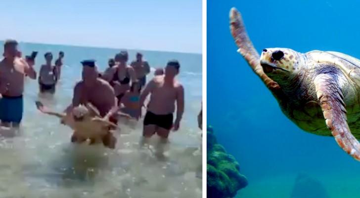 Puglia: una tartaruga marina viene trascinata a riva per un selfie e viene circondata dai bagnanti