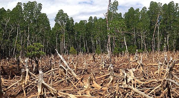 Les scientifiques le confirment : à ce jour, la solution la plus efficace au changement climatique est de planter des arbres. Voici de combien nous en avons besoin