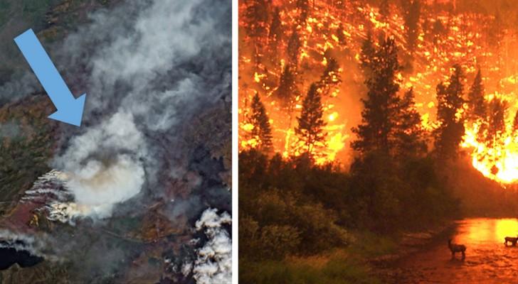 Umweltkatastrophe in der Arktis: Unbezwingbare Brände verheeren mehr als 800.000 Hektar Wald