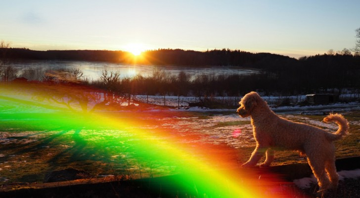 Aonde vão os nossos amigos animais quando morrem? Conheça a linda lenda da Ponte do Arco-íris