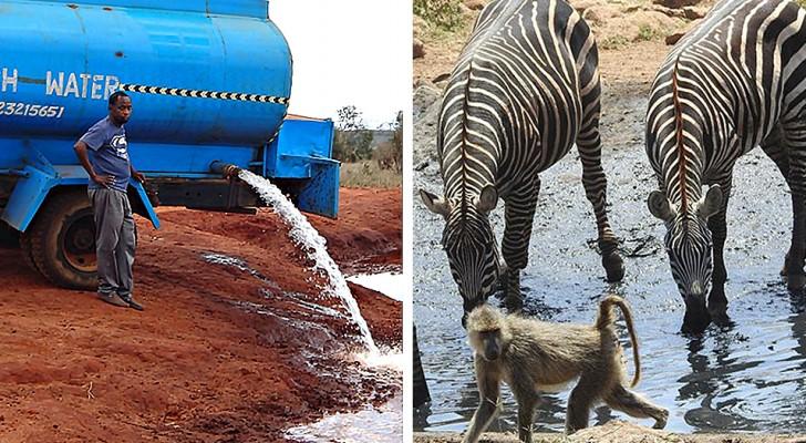 La storia di Water Man, l'uomo che ogni giorno porta acqua pulita agli animali selvatici assetati