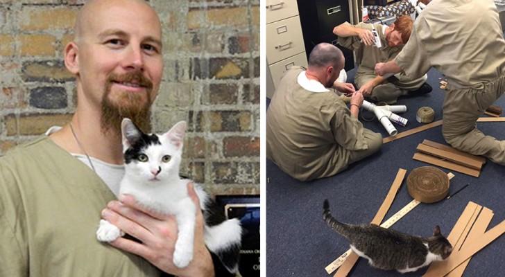 Cette prison a confié des chats errants aux détenus et l'initiative a changé la vie des deux parties