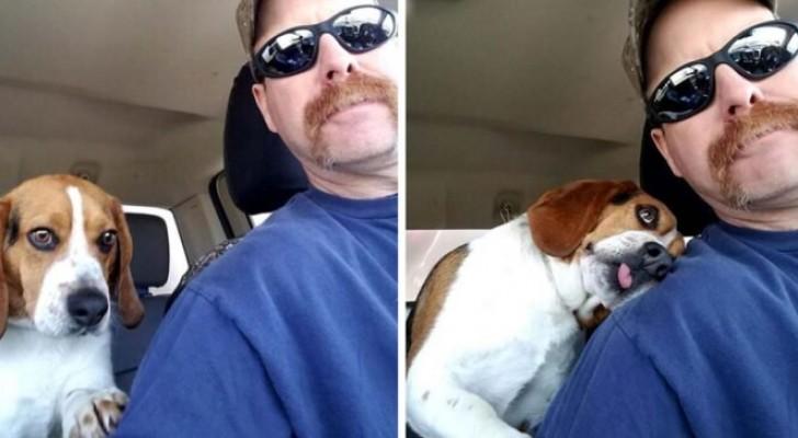 Un homme sauve un beagle de l'euthanasie... et lui le remercie avec toute la douceur dont il est capable