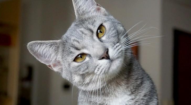Adoptera en katt - den kommer att skydda ditt hem och ditt liv