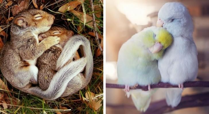 Estes 18 casais de animais apaixonados parecem ter saído de um álbum de casamento