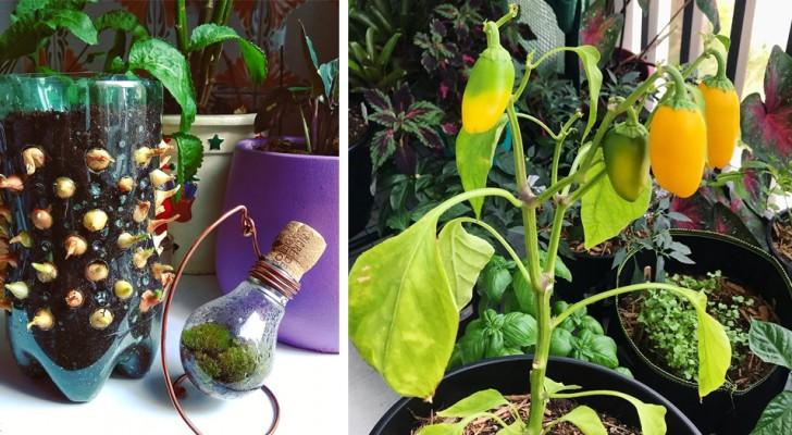 I 5 migliori alimenti che dovresti assolutamente coltivare sul tuo balcone