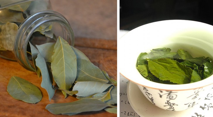 Bay leaf makes a precious herbal tea and here are all its benefits!