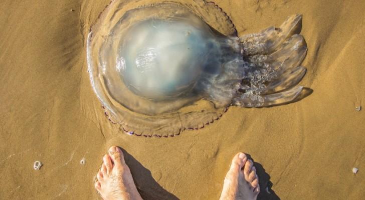 Tirare fuori dall'acqua le meduse è un reato punibile con la multa o con la reclusione