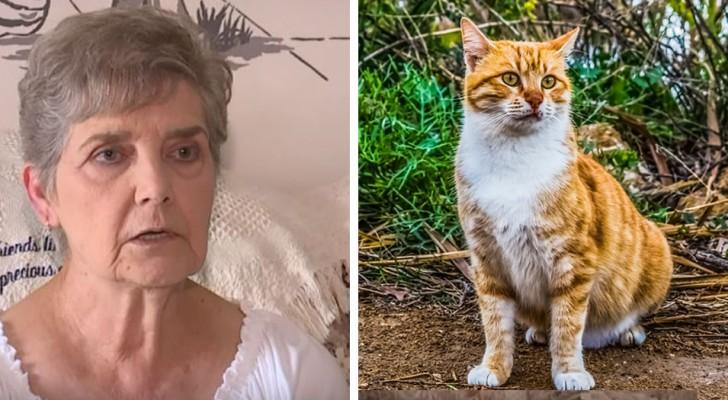 Esta mujer arriesga de ir en prisión por haber dado de comer a los gatos callejeros
