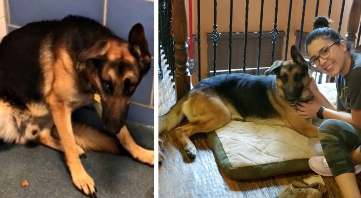 The moving story of Rocco who was abandoned by his owners because they were going to have a baby ...