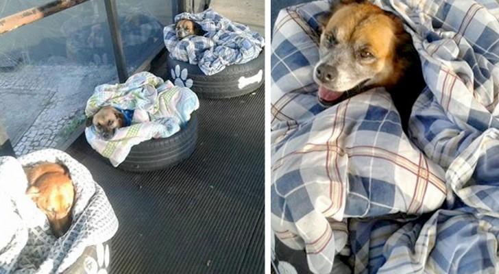 In diesem Busbahnhof können sich streunende Hunde mit Decken und Reifen vor der Kälte schützen